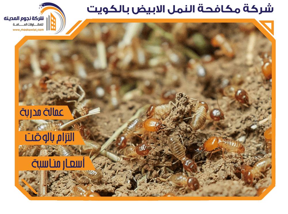 شركة مكافحة النمل الابيض بالكويت